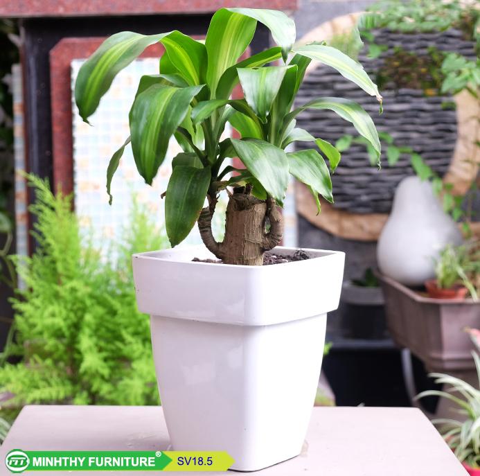 Chậu trồng cây thông minh sơn vuông - SV18.5