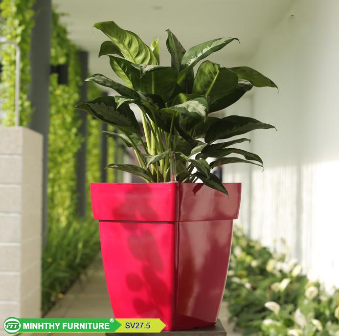 Chậu trồng cây thông minh sơn vuông - SV27.5